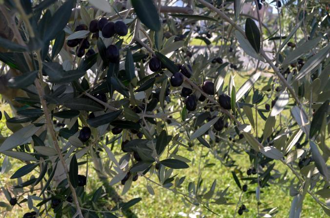 Aceitunas negras, yummy.